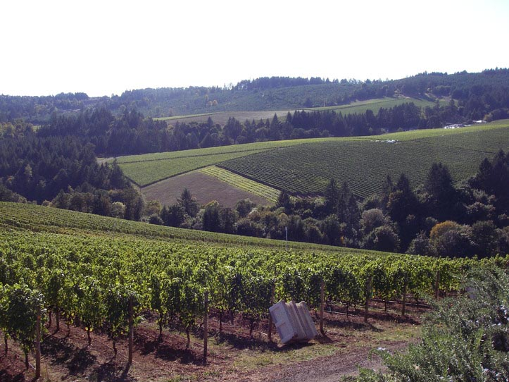 oregon-wine-tours