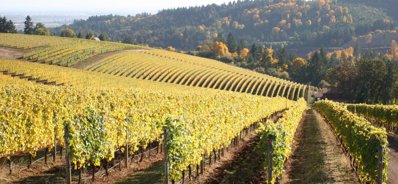 Oregon-wine-tour